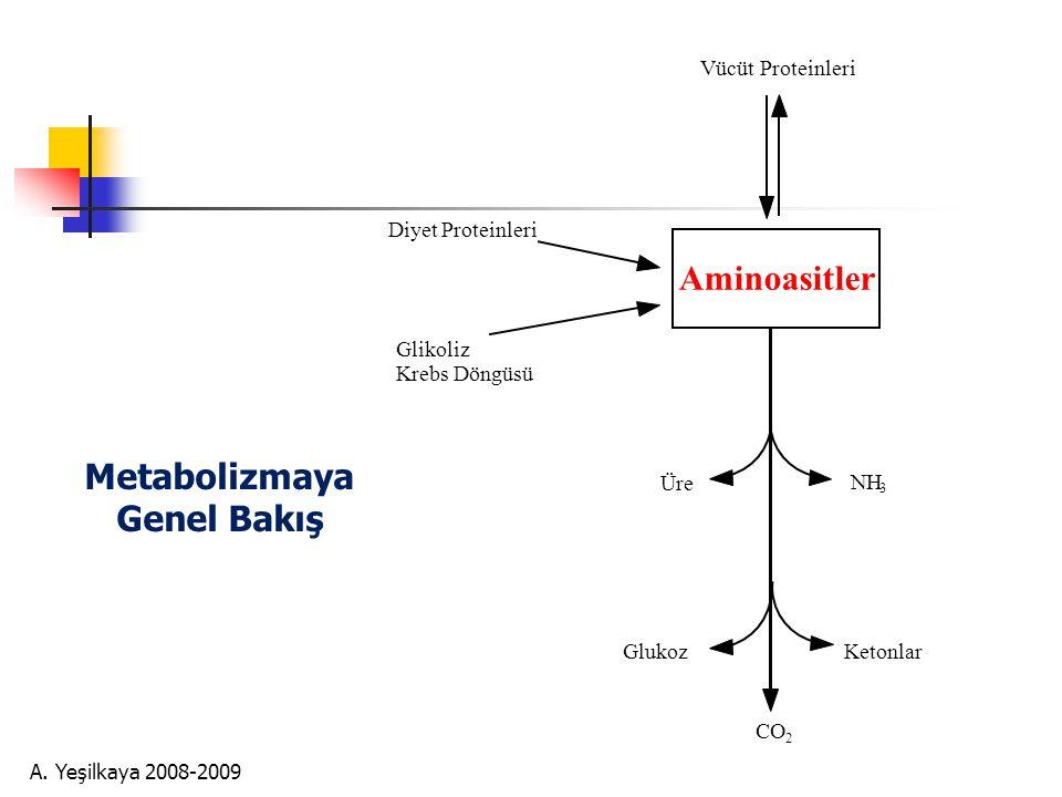 A. Yeşilkaya 2008-2009 Glutamat  GABA   -Aminobütirik asit  İnhibitörik Nörotransmitter