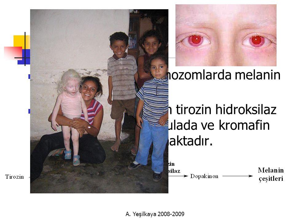 Albinizm  Melanositlerdeki melanozomlarda melanin sentezi  Reaksiyonu katalizliyen tirozin hidroksilaz aktivitesi adrenal medulada ve kromafin granüllerinde rastlanmaktadır.