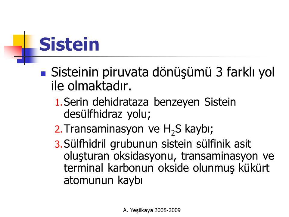 A.Yeşilkaya 2008-2009 Sistein  Sisteinin piruvata dönüşümü 3 farklı yol ile olmaktadır.