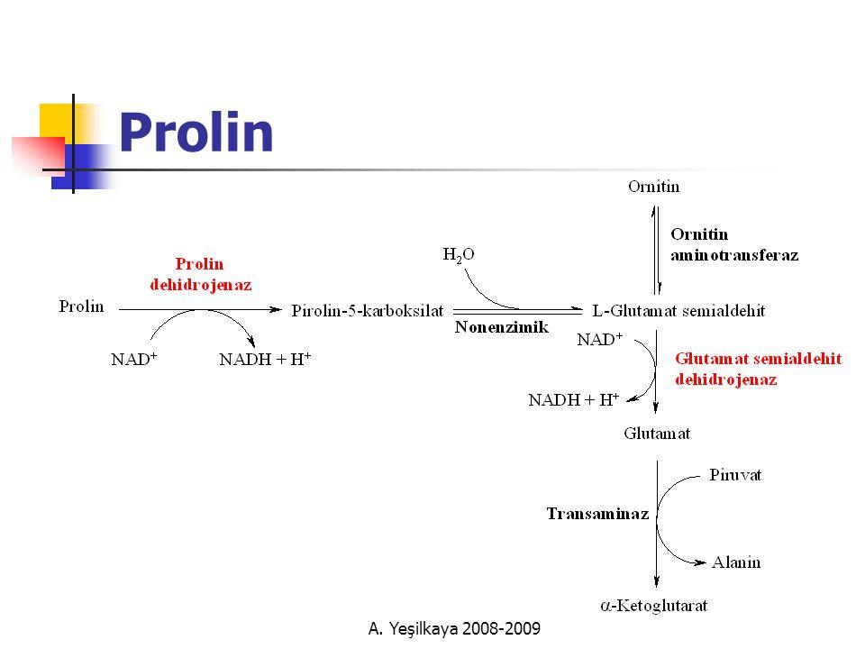A. Yeşilkaya 2008-2009 Prolin