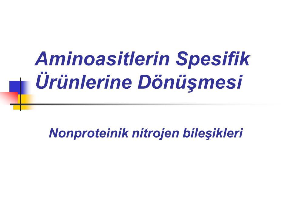 Aminoasitlerin Spesifik Ürünlerine Dönüşmesi Nonproteinik nitrojen bileşikleri