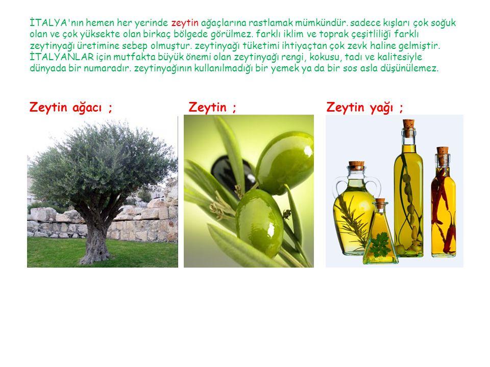 İTALYA nın hemen her yerinde zeytin ağaçlarına rastlamak mümkündür.