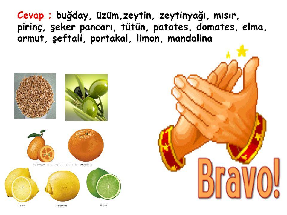 Cevap ; buğday, üzüm,zeytin, zeytinyağı, mısır, pirinç, şeker pancarı, tütün, patates, domates, elma, armut, şeftali, portakal, limon, mandalina