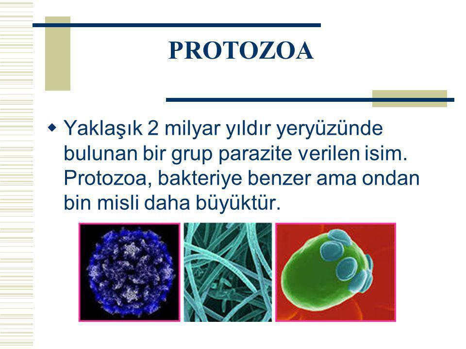  Yaklaşık 2 milyar yıldır yeryüzünde bulunan bir grup parazite verilen isim. Protozoa, bakteriye benzer ama ondan bin misli daha büyüktür. PROTOZOA