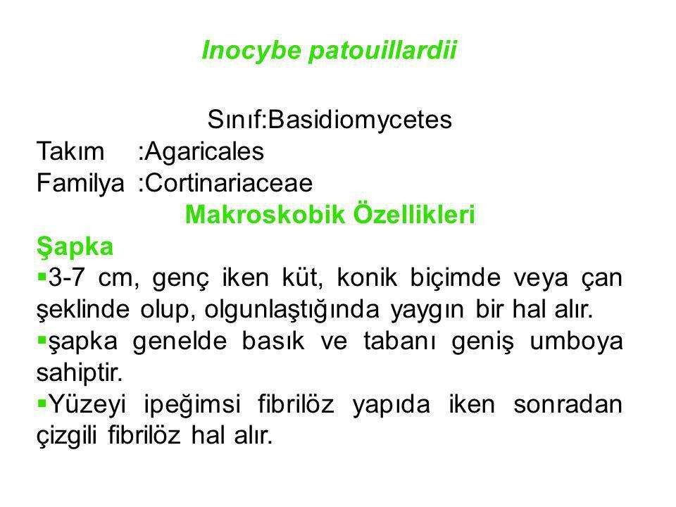 Inocybe patouillardii Sınıf:Basidiomycetes Takım:Agaricales Familya:Cortinariaceae Makroskobik Özellikleri Şapka  3-7 cm, genç iken küt, konik biçimd