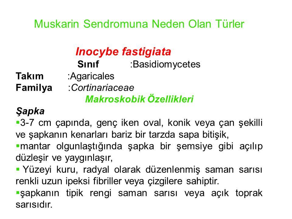 Muskarin Sendromuna Neden Olan Türler Inocybe fastigiata Sınıf :Basidiomycetes Takım :Agaricales Familya :Cortinariaceae Makroskobik Özellikleri Şapka