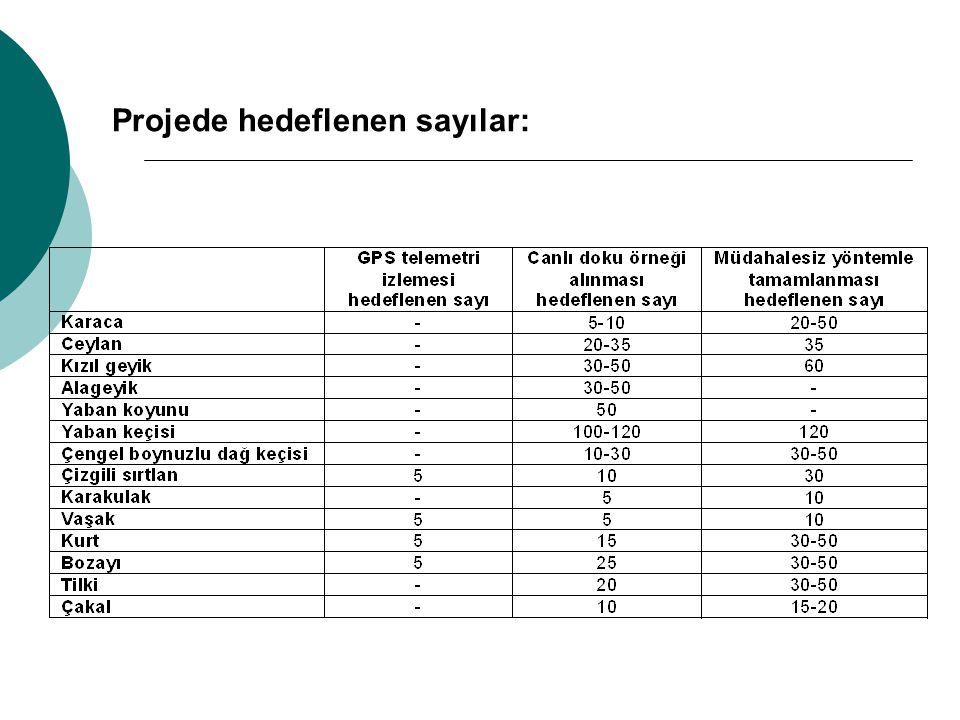Projede hedeflenen sayılar: