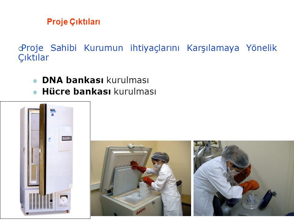 Proje Çıktıları  Proje Sahibi Kurumun ihtiyaçlarını Karşılamaya Yönelik Çıktılar  DNA bankası kurulması  Hücre bankası kurulması