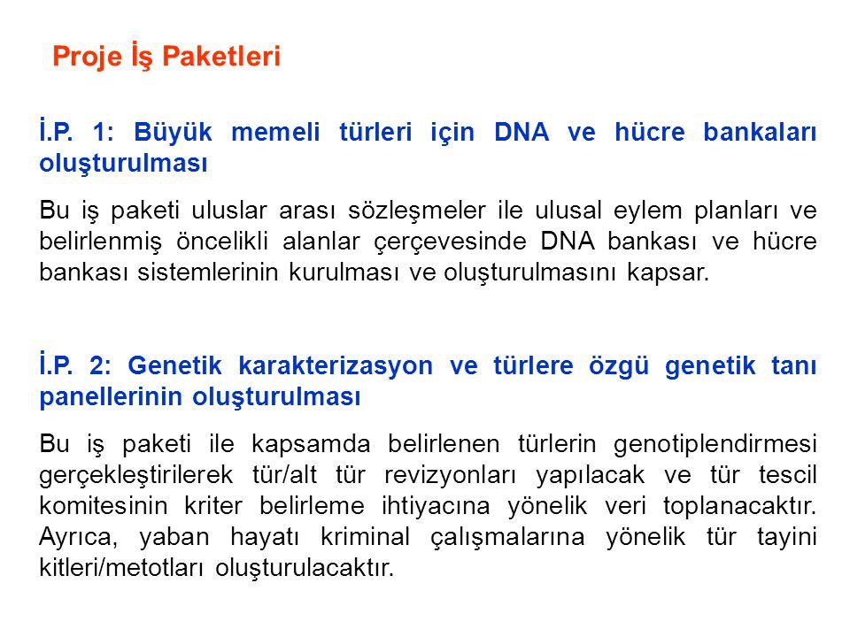 Proje İş Paketleri İ.P. 1: Büyük memeli türleri için DNA ve hücre bankaları oluşturulması Bu iş paketi uluslar arası sözleşmeler ile ulusal eylem plan