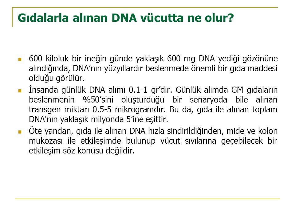 Gıdalarla alınan DNA vücutta ne olur.