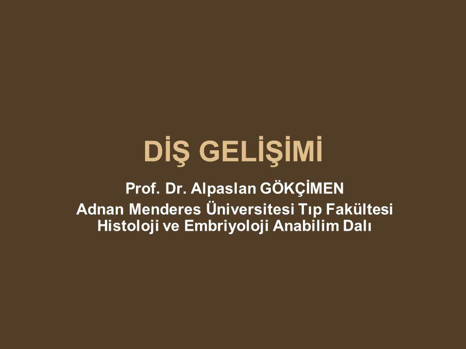 DİŞ GELİŞİMİ Prof. Dr. Alpaslan GÖKÇİMEN Adnan Menderes Üniversitesi Tıp Fakültesi Histoloji ve Embriyoloji Anabilim Dalı
