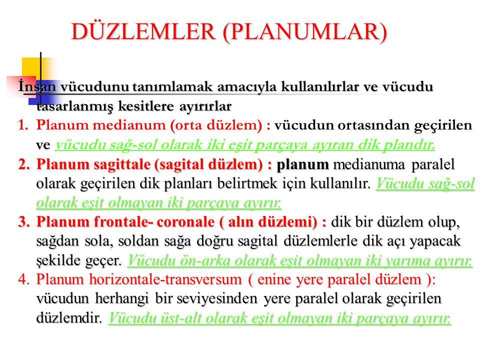 DÜZLEMLER (PLANUMLAR) İnsan vücudunu tanımlamak amacıyla kullanılırlar ve vücudu tasarlanmış kesitlere ayırırlar 1.Planum medianum (orta düzlem) : vüc