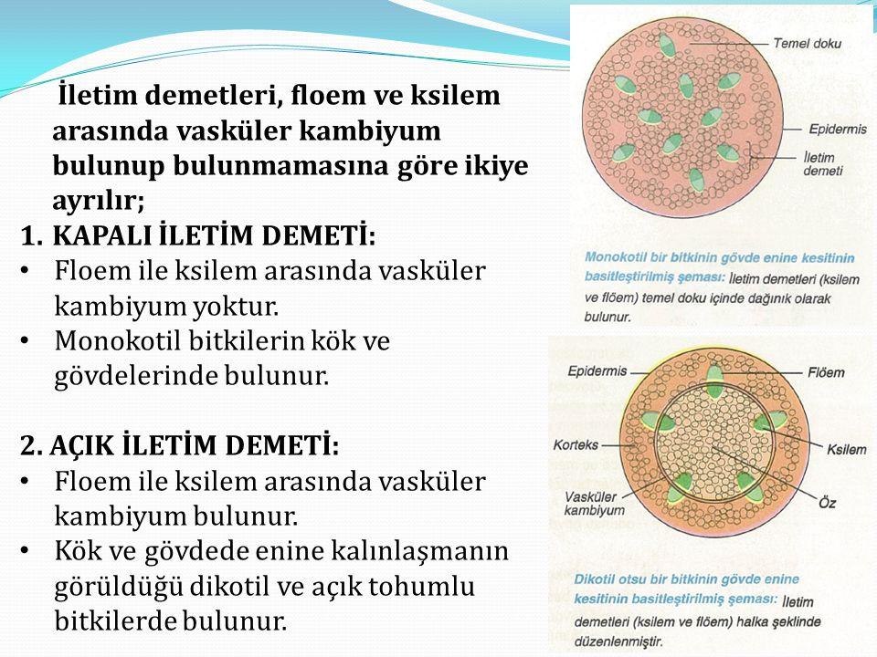 İletim demetleri, floem ve ksilem arasında vasküler kambiyum bulunup bulunmamasına göre ikiye ayrılır; 1.KAPALI İLETİM DEMETİ: • Floem ile ksilem aras