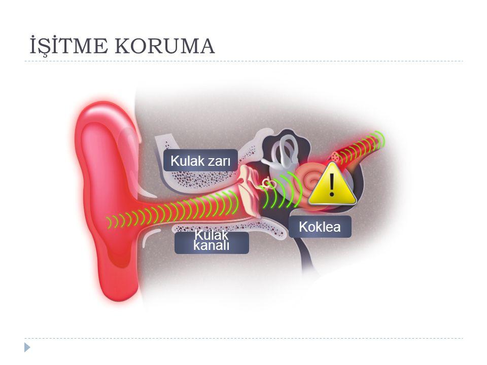 İŞİTME KORUMA Kulak kanalı Kulak zarı Koklea