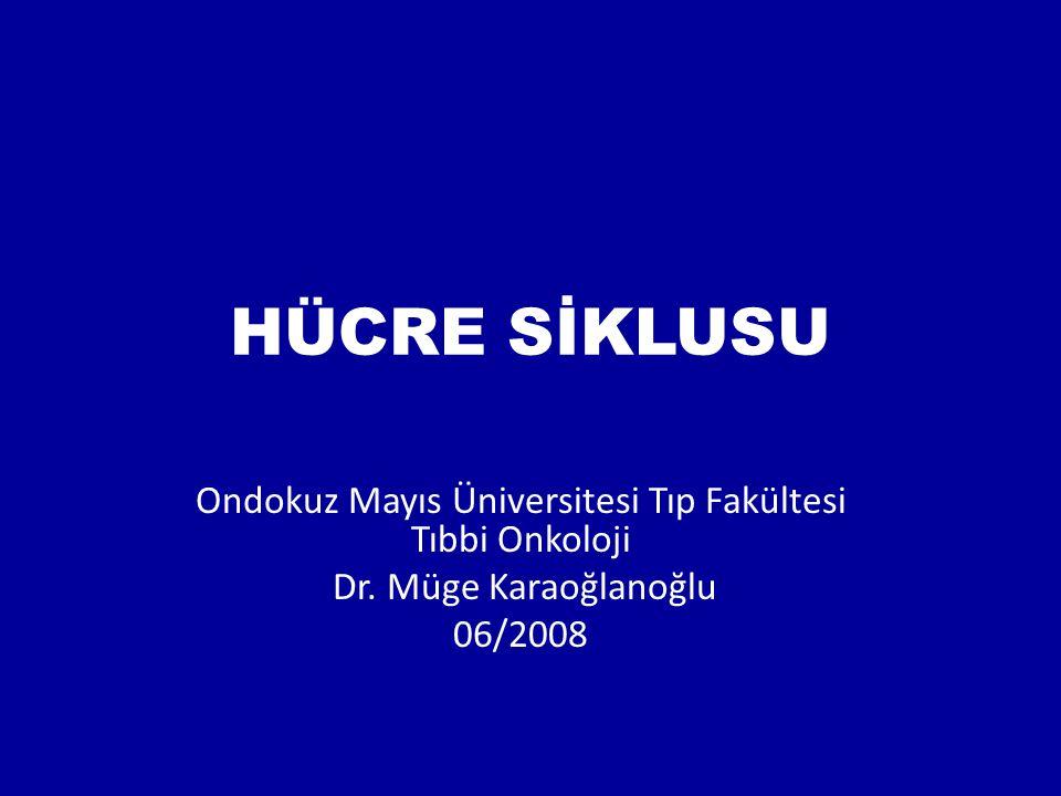HÜCRE SİKLUSU Ondokuz Mayıs Üniversitesi Tıp Fakültesi Tıbbi Onkoloji Dr. Müge Karaoğlanoğlu 06/2008
