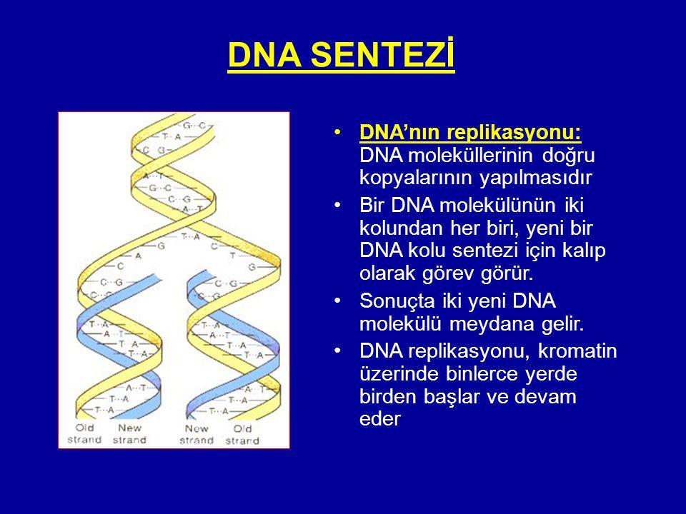 DNA SENTEZİ •DNA'nın replikasyonu: DNA moleküllerinin doğru kopyalarının yapılmasıdır •Bir DNA molekülünün iki kolundan her biri, yeni bir DNA kolu se