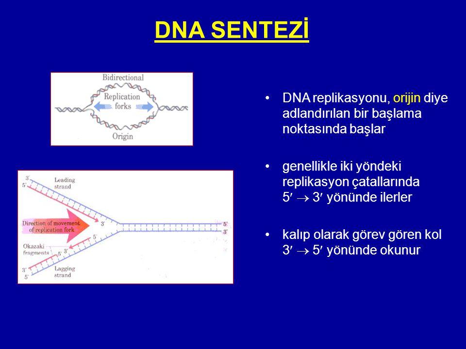 DNA SENTEZİ •DNA replikasyonu, orijin diye adlandırılan bir başlama noktasında başlar •genellikle iki yöndeki replikasyon çatallarında 5  3 yönünde i
