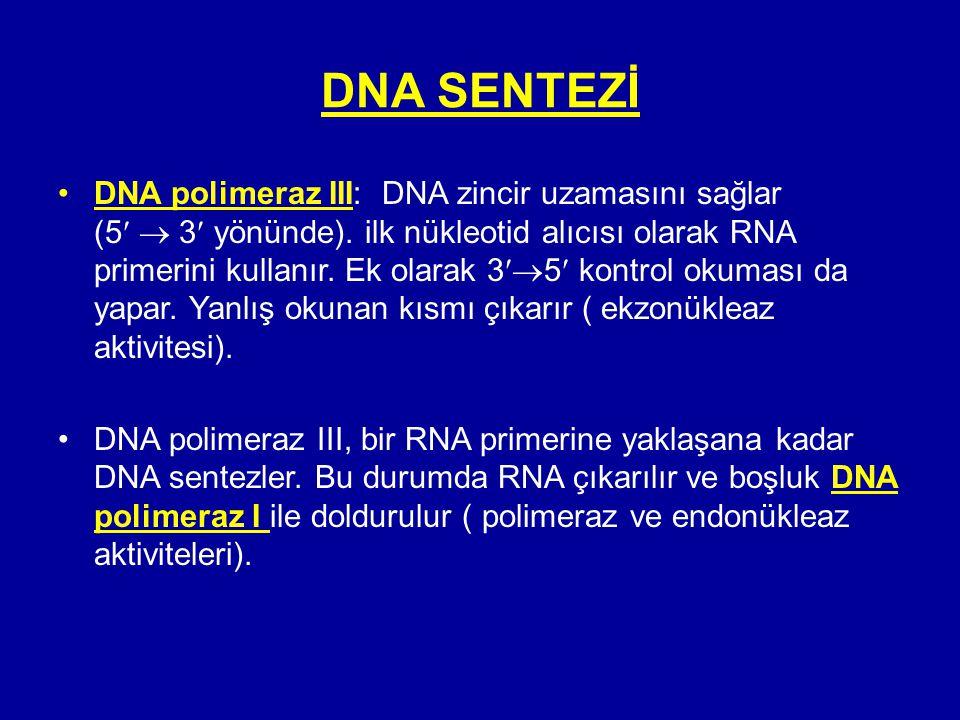 DNA SENTEZİ •DNA polimeraz III: DNA zincir uzamasını sağlar (5  3 yönünde). ilk nükleotid alıcısı olarak RNA primerini kullanır. Ek olarak 3  5 kon