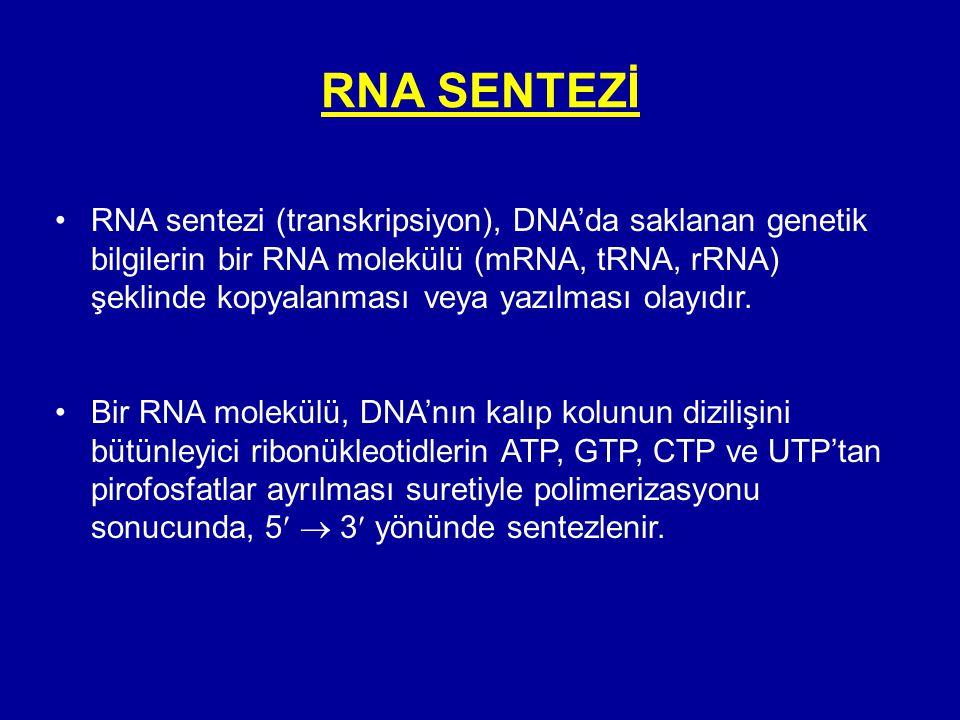 RNA SENTEZİ •RNA sentezi (transkripsiyon), DNA'da saklanan genetik bilgilerin bir RNA molekülü (mRNA, tRNA, rRNA) şeklinde kopyalanması veya yazılması