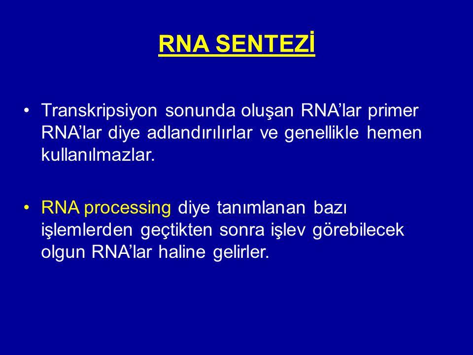 RNA SENTEZİ •Transkripsiyon sonunda oluşan RNA'lar primer RNA'lar diye adlandırılırlar ve genellikle hemen kullanılmazlar. •RNA processing diye tanıml