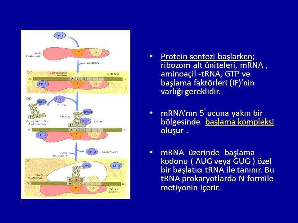 • Protein sentezi başlarken; ribozom alt üniteleri, mRNA, aminoaçil -tRNA, GTP ve başlama faktörleri (IF)'nin varlığı gereklidir. • mRNA'nın 5 ′ ucuna