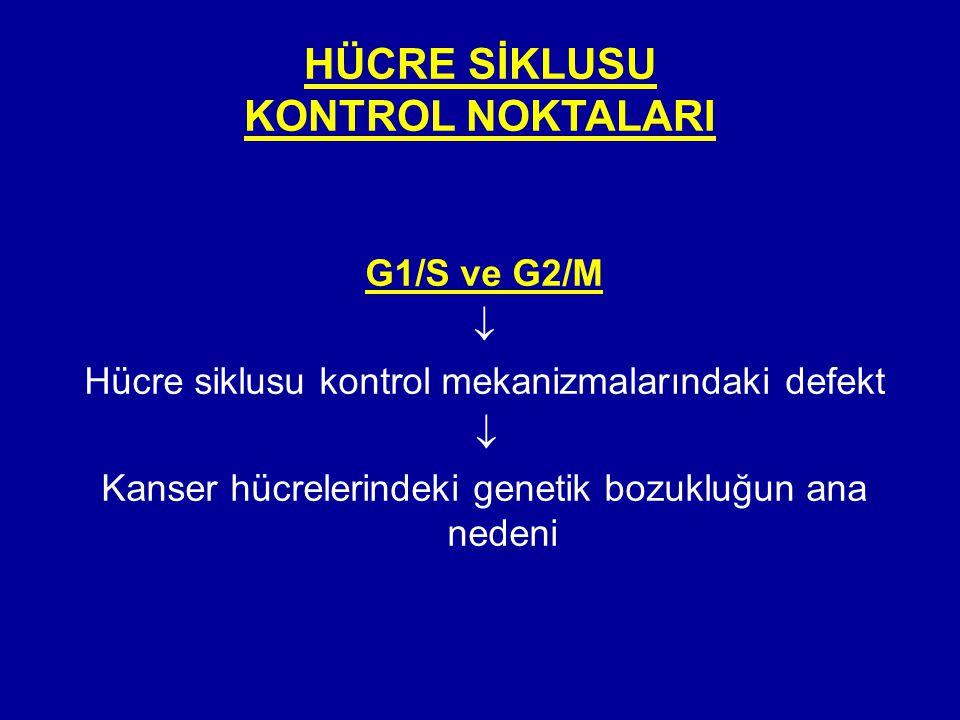 HÜCRE SİKLUSU KONTROL NOKTALARI G1/S ve G2/M  Hücre siklusu kontrol mekanizmalarındaki defekt  Kanser hücrelerindeki genetik bozukluğun ana nedeni