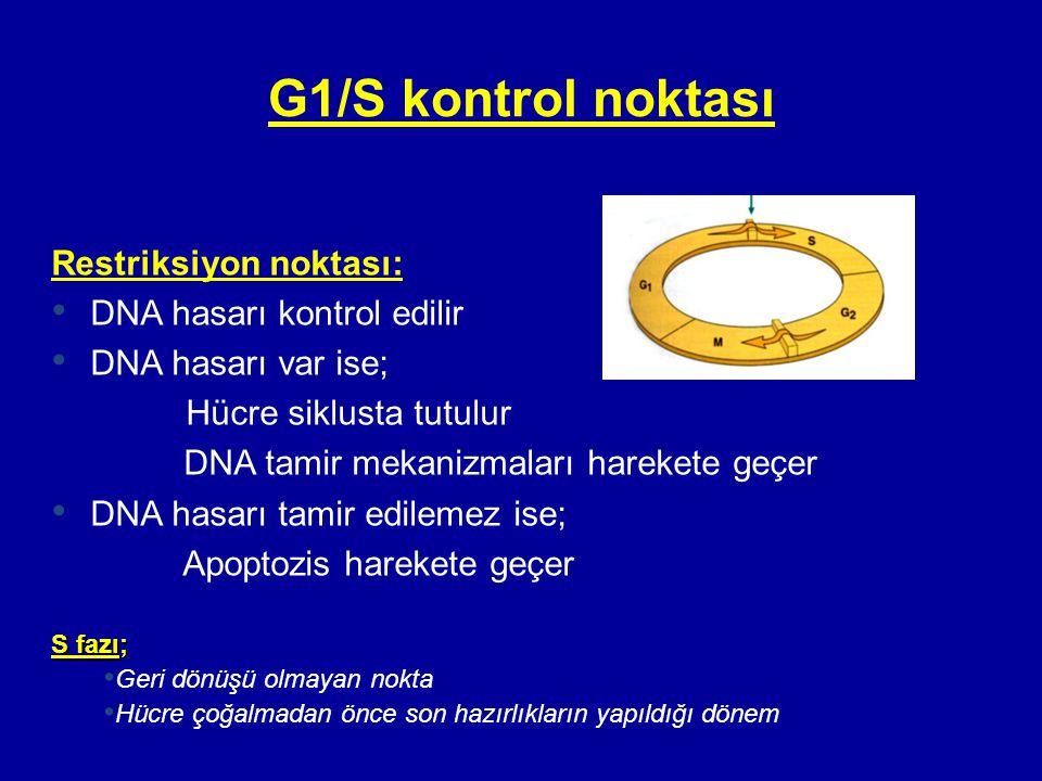 G1/S kontrol noktası Restriksiyon noktası: • DNA hasarı kontrol edilir • DNA hasarı var ise; Hücre siklusta tutulur DNA tamir mekanizmaları harekete g