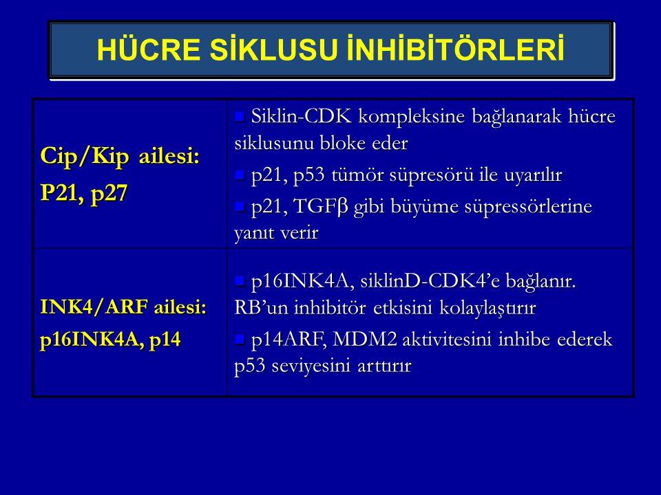 HÜCRE SİKLUSU İNHİBİTÖRLERİ Cip/Kip ailesi: P21, p27  Siklin-CDK kompleksine bağlanarak hücre siklusunu bloke eder  p21, p53 tümör süpresörü ile uya