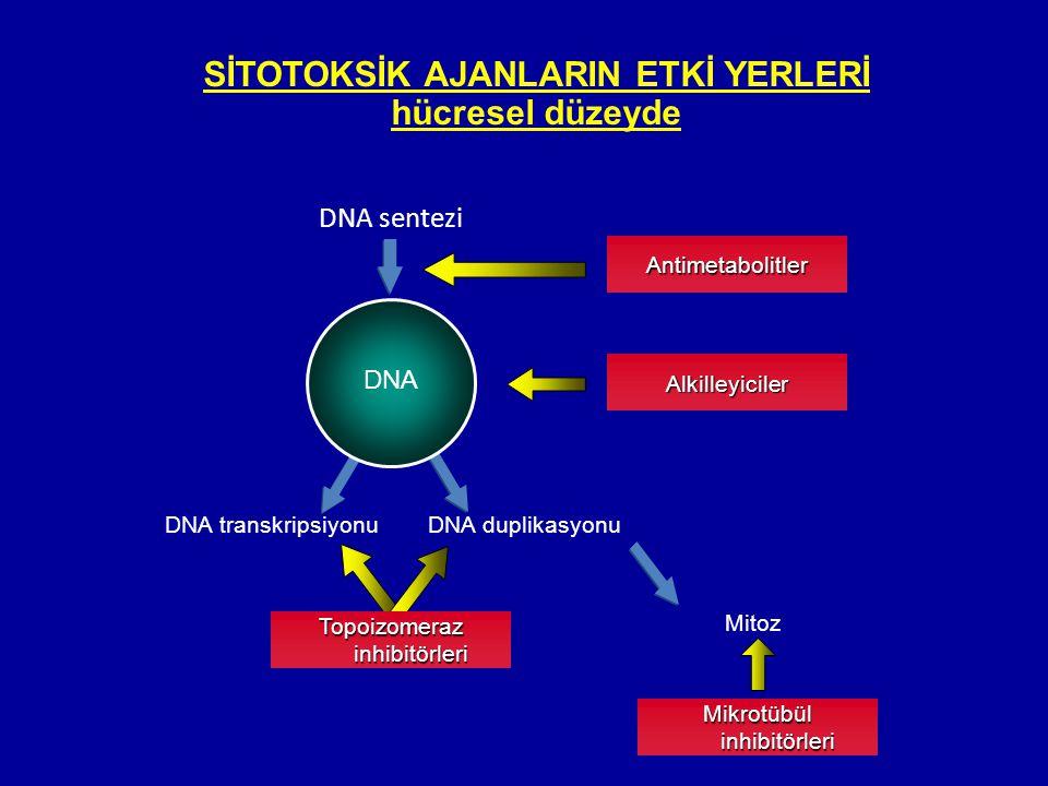 SİTOTOKSİK AJANLARIN ETKİ YERLERİ hücresel düzeyde DNA sentezi Antimetabolitler DNA DNA transkripsiyonuDNA duplikasyonu Mitoz Alkilleyiciler Mikrotübü