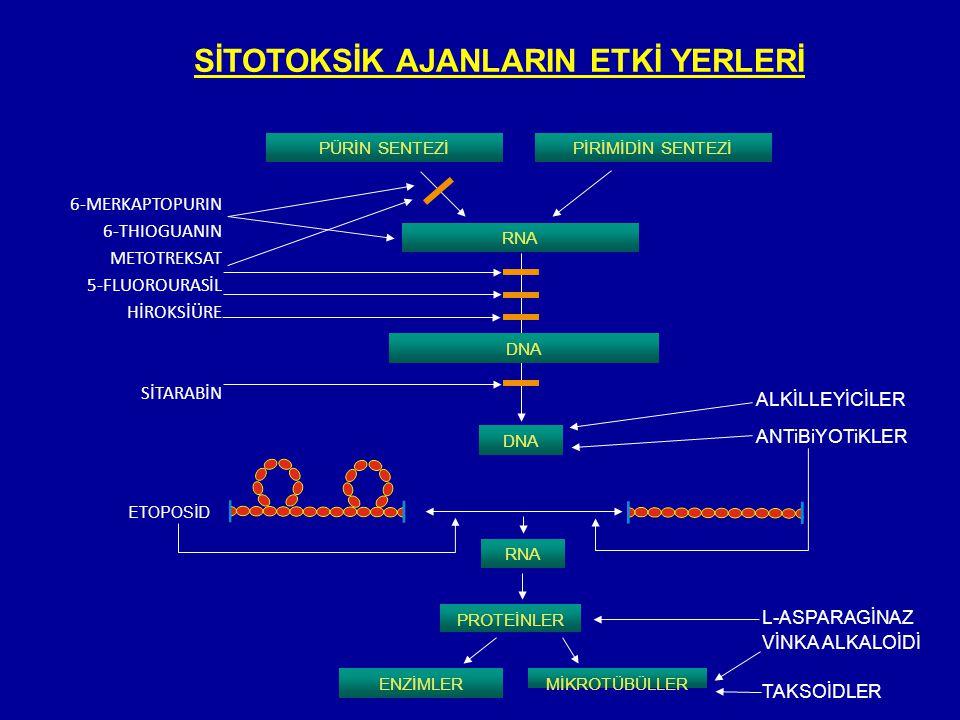SİTOTOKSİK AJANLARIN ETKİ YERLERİ 6-MERKAPTOPURIN 6-THIOGUANIN METOTREKSAT 5-FLUOROURASİL HİROKSİÜRE SİTARABİN PÜRİN SENTEZİPİRİMİDİN SENTEZİ RNA DNA