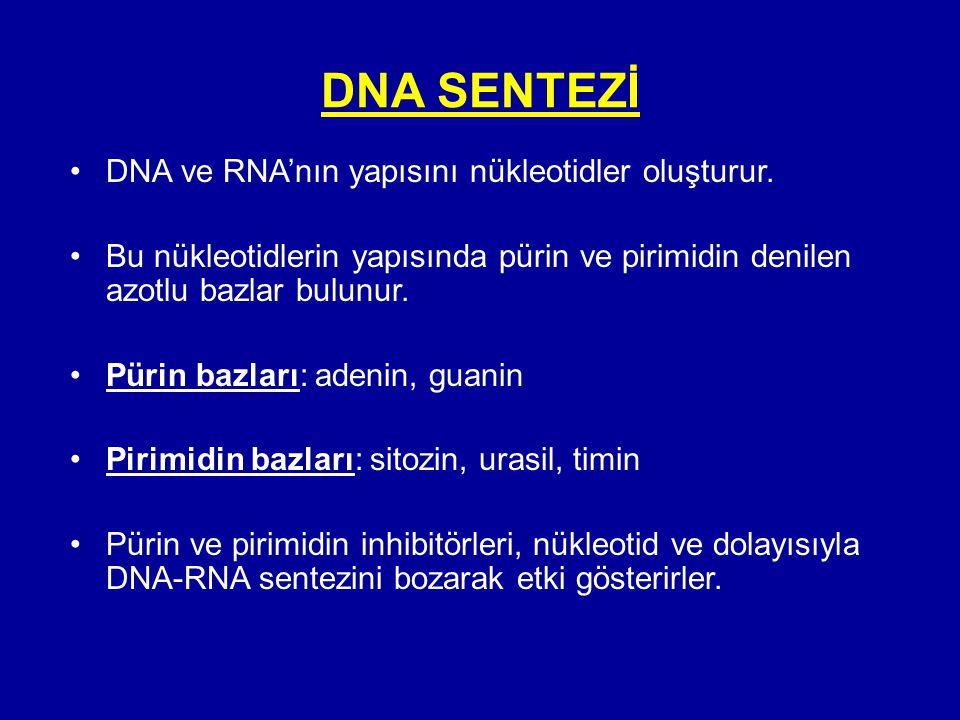 DNA SENTEZİ •DNA ve RNA'nın yapısını nükleotidler oluşturur. •Bu nükleotidlerin yapısında pürin ve pirimidin denilen azotlu bazlar bulunur. •Pürin baz
