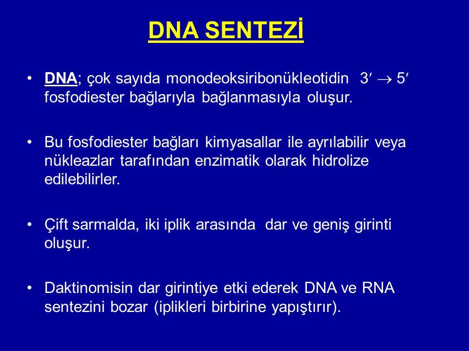 DNA SENTEZİ •DNA; çok sayıda monodeoksiribonükleotidin 3  5 fosfodiester bağlarıyla bağlanmasıyla oluşur. •Bu fosfodiester bağları kimyasallar ile ay