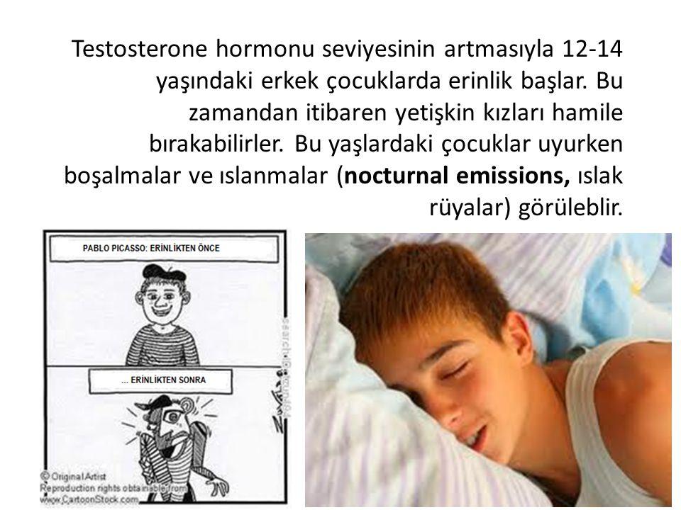 Testosterone hormonu seviyesinin artmasıyla 12-14 yaşındaki erkek çocuklarda erinlik başlar. Bu zamandan itibaren yetişkin kızları hamile bırakabilirl