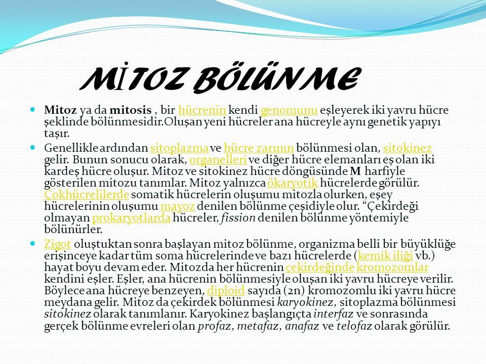 M İ TOZ BÖLÜNME MMitoz ya da mitosis, bir hücrenin kendi genomunu eşleyerek iki yavru hücre şeklinde bölünmesidir.Oluşan yeni hücreler ana hücreyle