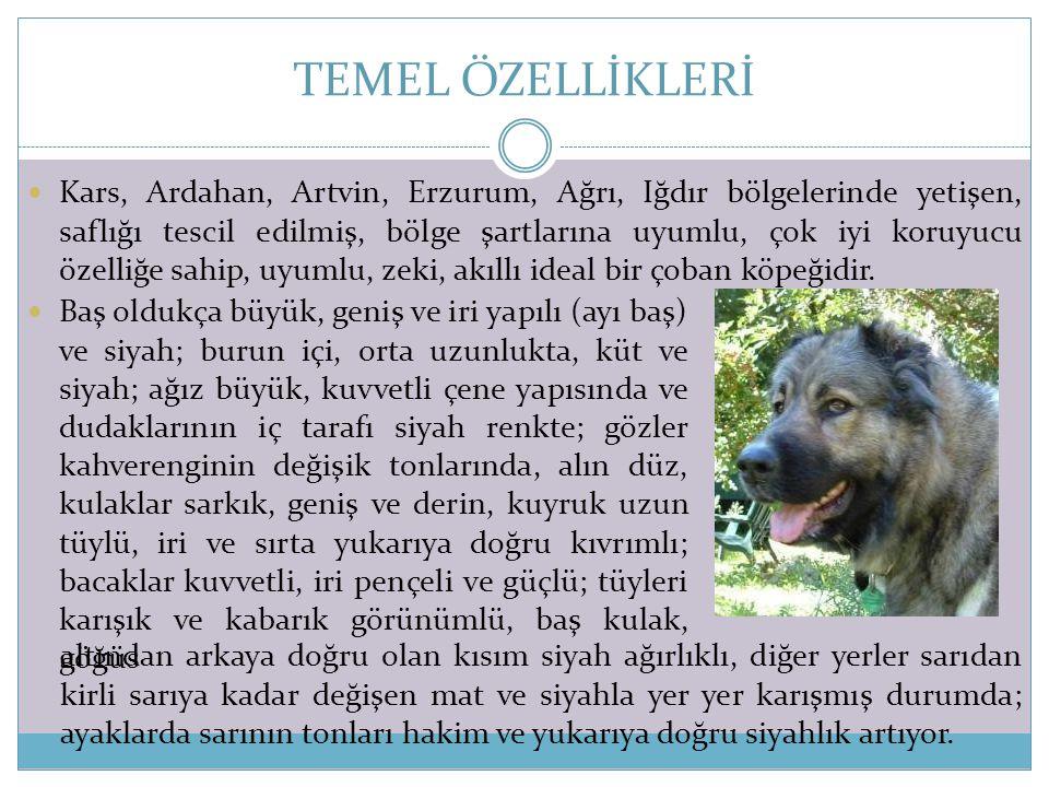 TEMEL ÖZELLİKLERİ  Kars, Ardahan, Artvin, Erzurum, Ağrı, Iğdır bölgelerinde yetişen, saflığı tescil edilmiş, bölge şartlarına uyumlu, çok iyi koruyuc