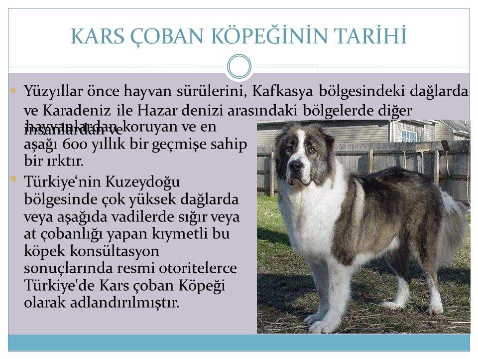 KARS ÇOBAN KÖPEĞİNİN TARİHİ  Yüzyıllar önce hayvan sürülerini, Kafkasya bölgesindeki dağlarda ve Karadeniz ile Hazar denizi arasındaki bölgelerde diğ