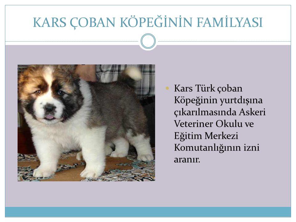 KARS ÇOBAN KÖPEĞİNİN FAMİLYASI  Kars Türk çoban Köpeğinin yurtdışına çıkarılmasında Askeri Veteriner Okulu ve Eğitim Merkezi Komutanlığının izni aran