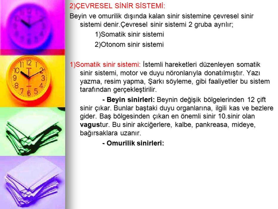 2)ÇEVRESEL SİNİR SİSTEMİ: Beyin ve omurilik dışında kalan sinir sistemine çevresel sinir sistemi denir.Çevresel sinir sistemi 2 gruba ayrılır; 1)Somatik sinir sistemi 2)Otonom sinir sistemi 1)Somatik sinir sistemi: İstemli hareketleri düzenleyen somatik sinir sistemi, motor ve duyu nöronlarıyla donatılmıştır.