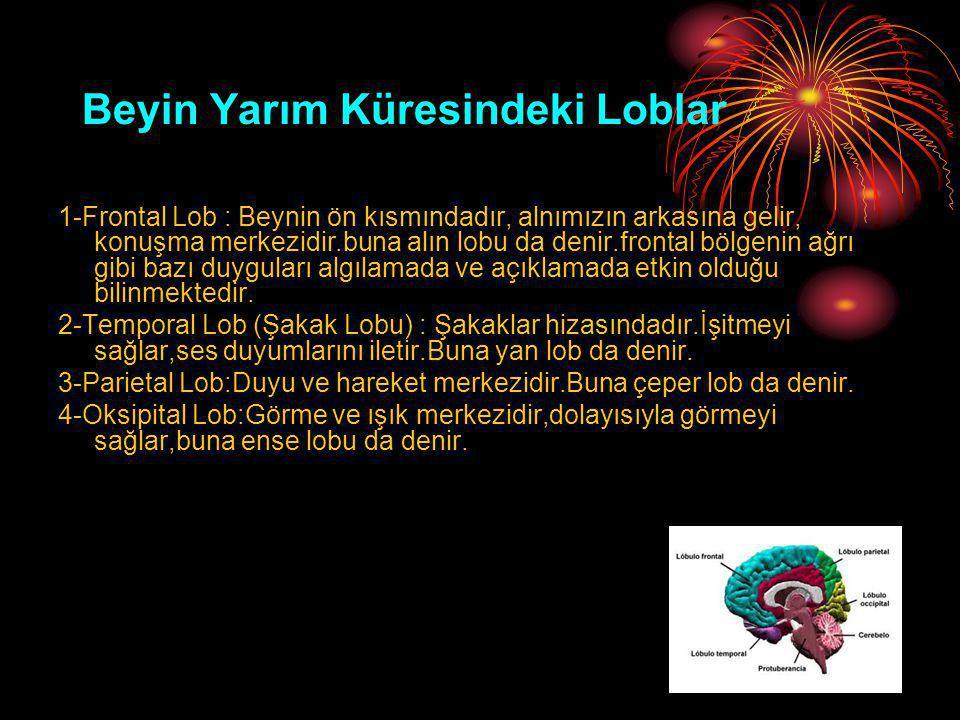 Beyin Yarım Küresindeki Loblar 1-Frontal Lob : Beynin ön kısmındadır, alnımızın arkasına gelir, konuşma merkezidir.buna alın lobu da denir.frontal böl