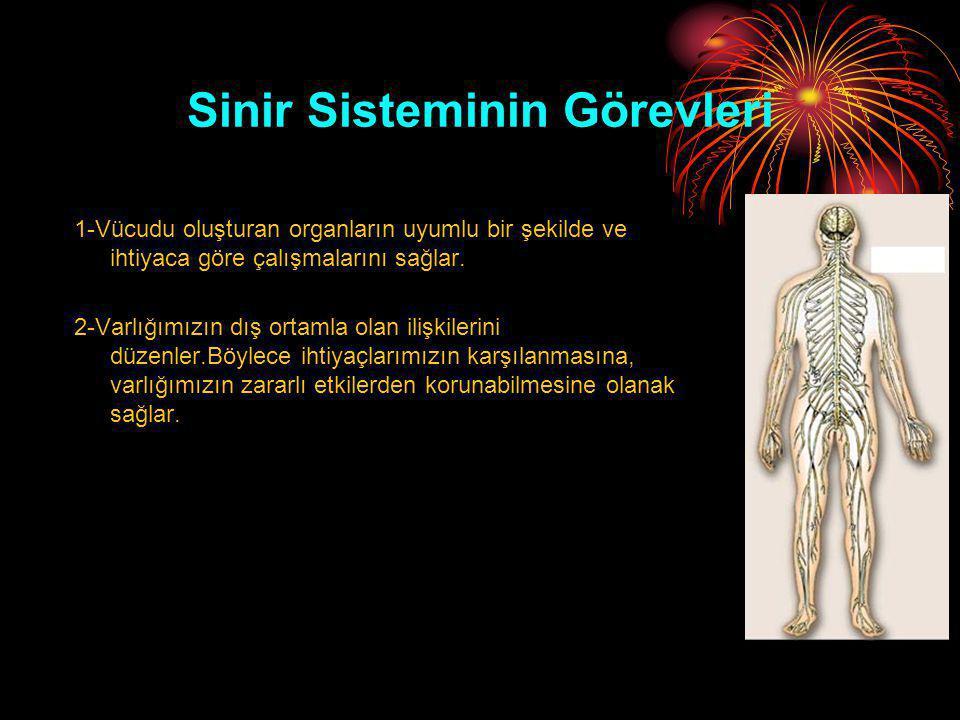 Sinir Sisteminin Görevleri 1-Vücudu oluşturan organların uyumlu bir şekilde ve ihtiyaca göre çalışmalarını sağlar. 2-Varlığımızın dış ortamla olan ili