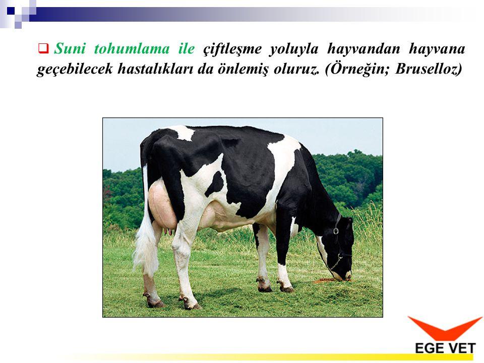  Suni tohumlama ile çiftleşme yoluyla hayvandan hayvana geçebilecek hastalıkları da önlemiş oluruz. (Örneğin; Bruselloz)