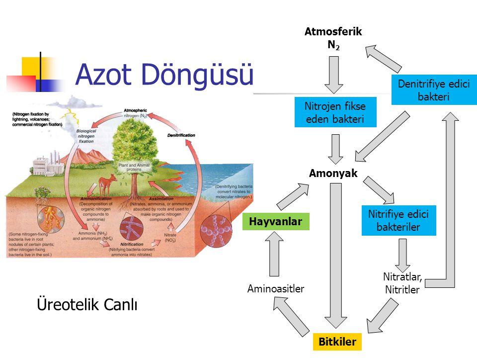 Azot Döngüsü Üreotelik Canlı Atmosferik N 2 Nitrojen fikse eden bakteri Amonyak Bitkiler Nitratlar, Nitritler Nitrifiye edici bakteriler Aminoasitler Hayvanlar Denitrifiye edici bakteri