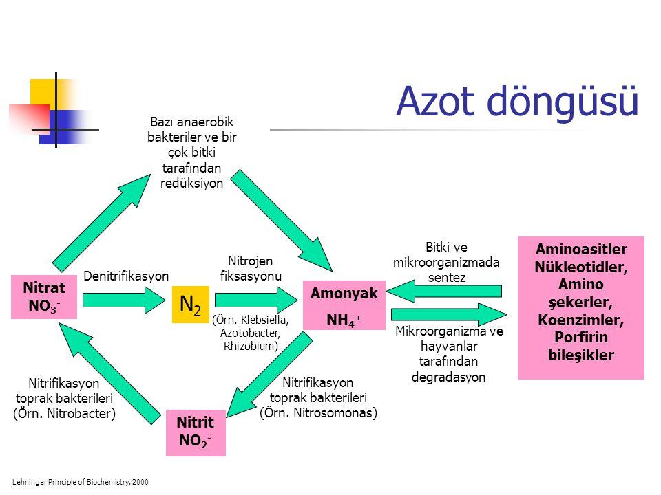 Azot döngüsü Amonyak NH 4 + N2N2 Nitrat NO 3 - Nitrit NO 2 - Aminoasitler Nükleotidler, Amino şekerler, Koenzimler, Porfirin bileşikler Mikroorganizma ve hayvanlar tarafından degradasyon Bitki ve mikroorganizmada sentez Nitrifikasyon toprak bakterileri (Örn.