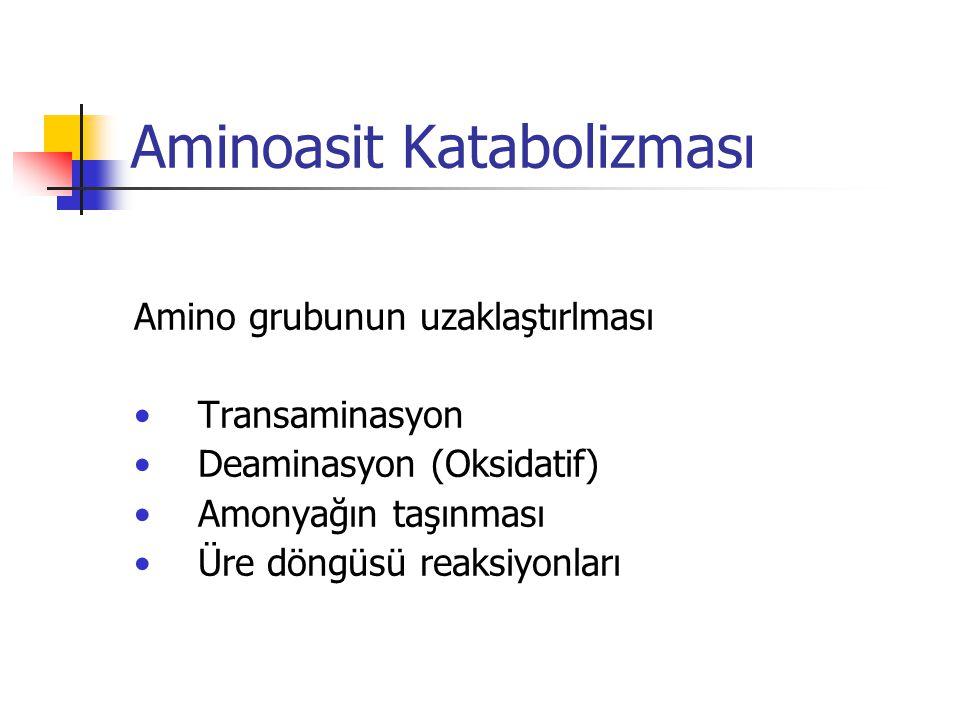 Aminoasit Katabolizması Amino grubunun uzaklaştırlması •Transaminasyon •Deaminasyon (Oksidatif) •Amonyağın taşınması •Üre döngüsü reaksiyonları
