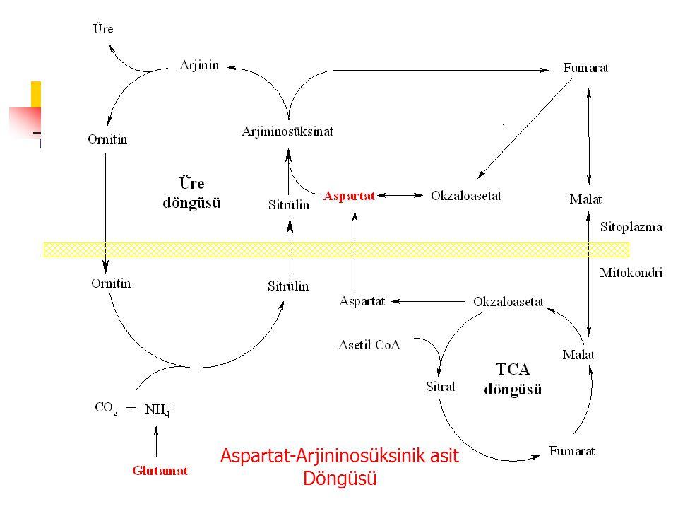 Aspartat-Arjininosüksinik asit Döngüsü
