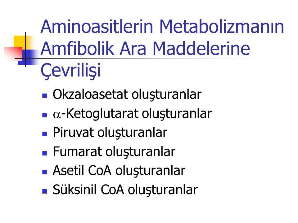 Aminoasitlerin Metabolizmanın Amfibolik Ara Maddelerine Çevrilişi  Okzaloasetat oluşturanlar   -Ketoglutarat oluşturanlar  Piruvat oluşturanlar  Fumarat oluşturanlar  Asetil CoA oluşturanlar  Süksinil CoA oluşturanlar
