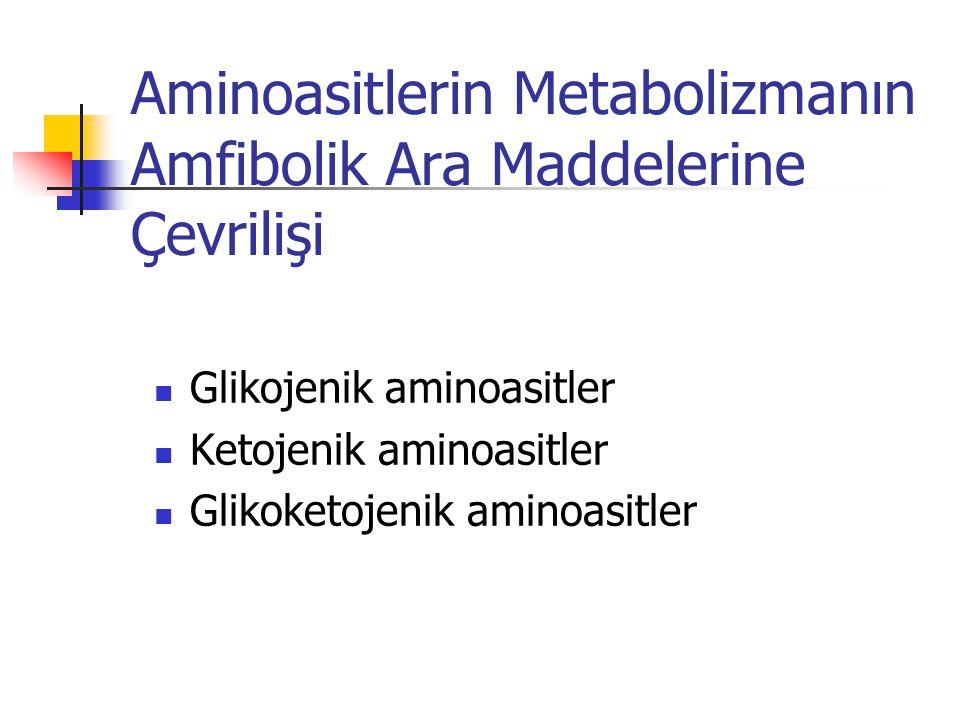 Aminoasitlerin Metabolizmanın Amfibolik Ara Maddelerine Çevrilişi  Glikojenik aminoasitler  Ketojenik aminoasitler  Glikoketojenik aminoasitler