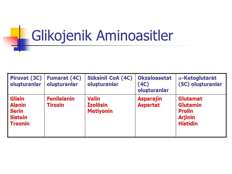 Glikojenik Aminoasitler Piruvat (3C) oluşturanlar Fumarat (4C) oluşturanlar Süksinil CoA (4C) oluşturanlar Okzaloasetat (4C) oluşturanlar  -Ketoglutarat (5C) oluşturanlar Glisin Alanin Serin Sistein Treonin Fenilalanin Tirozin Valin İzolösin Metiyonin Asparajin Aspartat Glutamat Glutamin Prolin Arjinin Histidin