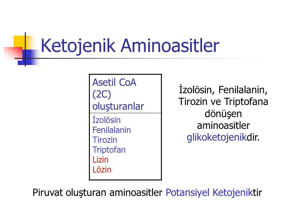 Ketojenik Aminoasitler Asetil CoA (2C) oluşturanlar İzolösin Fenilalanin Tirozin Triptofan Lizin Lözin Piruvat oluşturan aminoasitler Potansiyel Ketojeniktir İzolösin, Fenilalanin, Tirozin ve Triptofana dönüşen aminoasitler glikoketojenikdir.