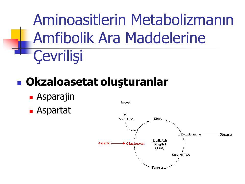 Aminoasitlerin Metabolizmanın Amfibolik Ara Maddelerine Çevrilişi  Okzaloasetat oluşturanlar  Asparajin  Aspartat